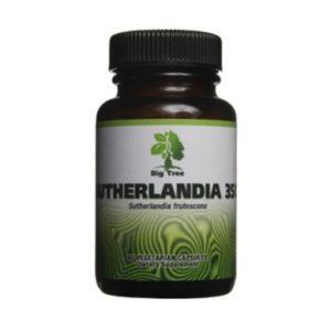 Big-tree-Sutherlandia